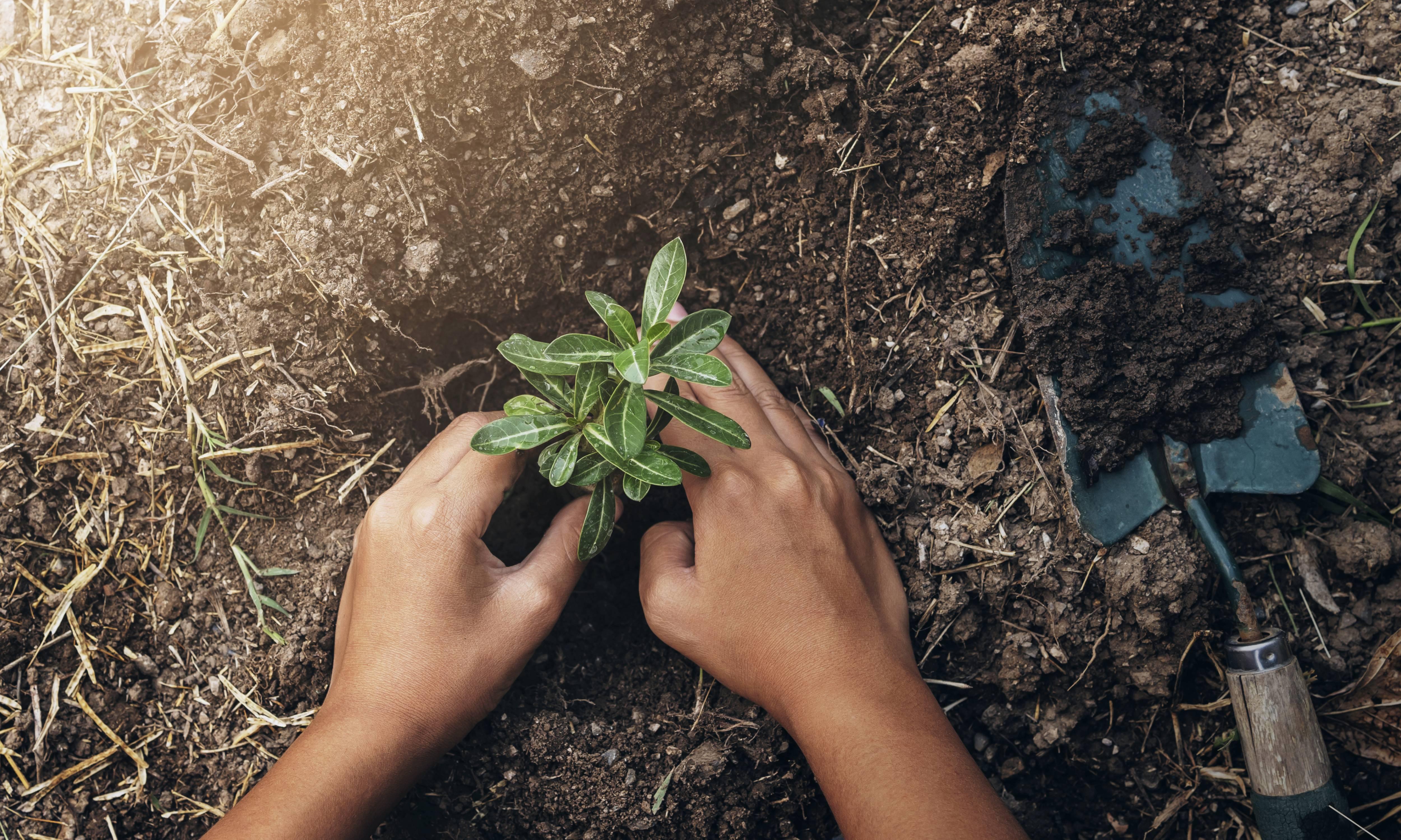 Matéria MBeD - Fundos ESG - Plantando árvore no jardim. conceito salvar mundo terra verde - Imagem em Alta Resolução - palavras-chaves:Plantar, Árvore, Planta nova, Árvore Nova, Folha