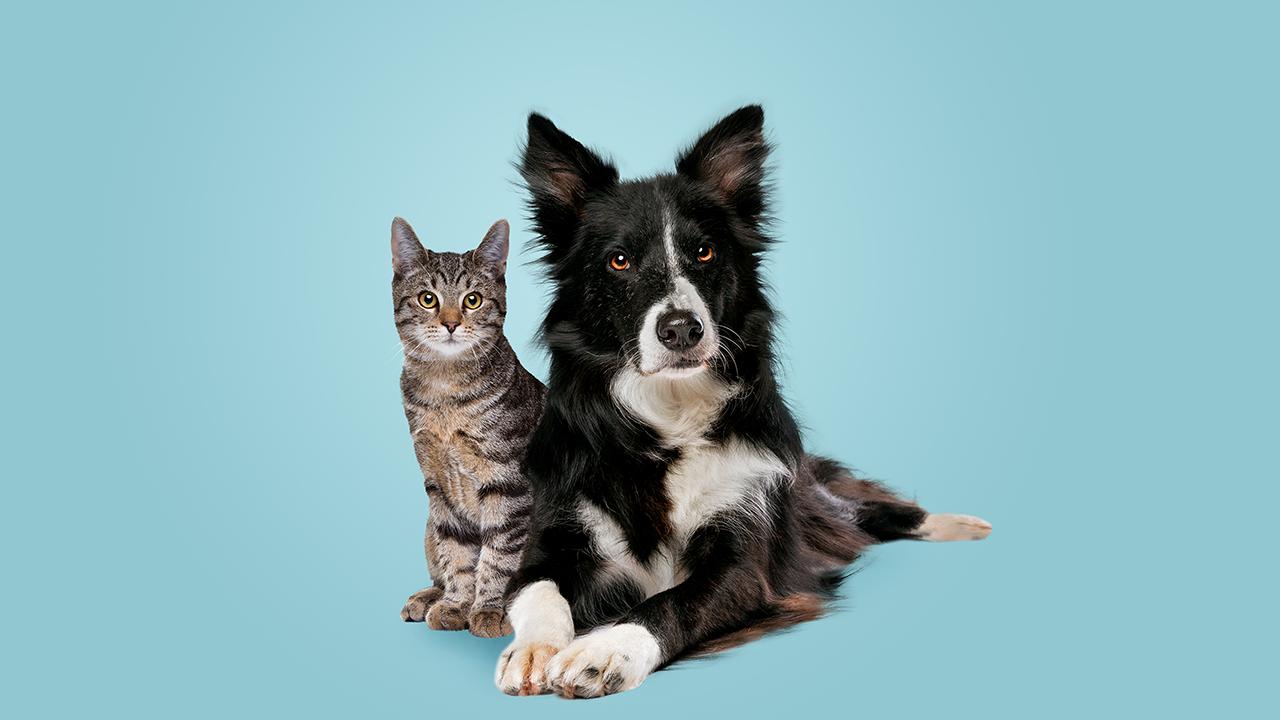 Quanto custa ter um animal de estimação? Cachorro e Gato.