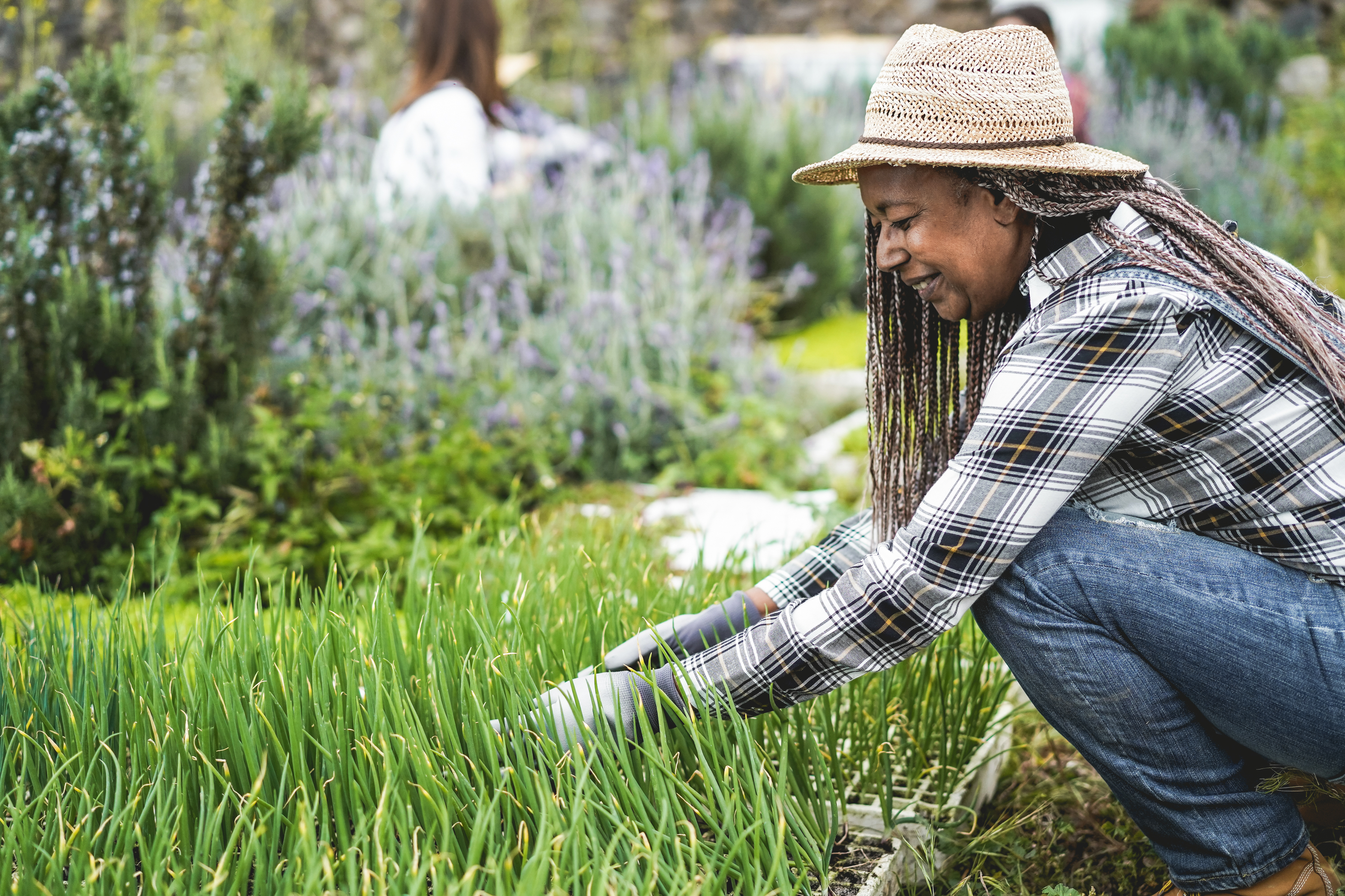 Matéria MBeD - Caminhos para previdencia - Mulher idosa africana preparando mudas em uma caixa com solo dentro de fazenda de vegetais - Conceito de alimentos saudáveis - Foco principal no rosto
