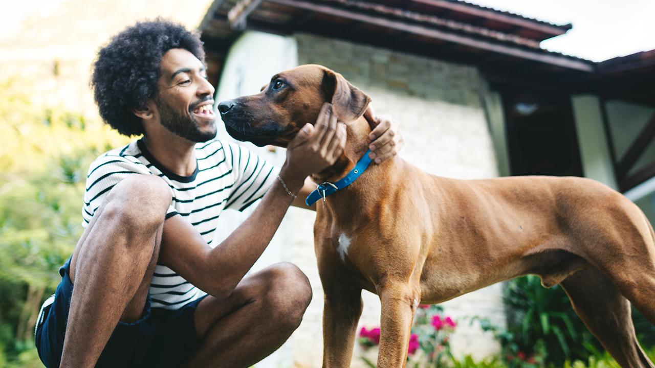 Quanto custa ter um animal de estimação?